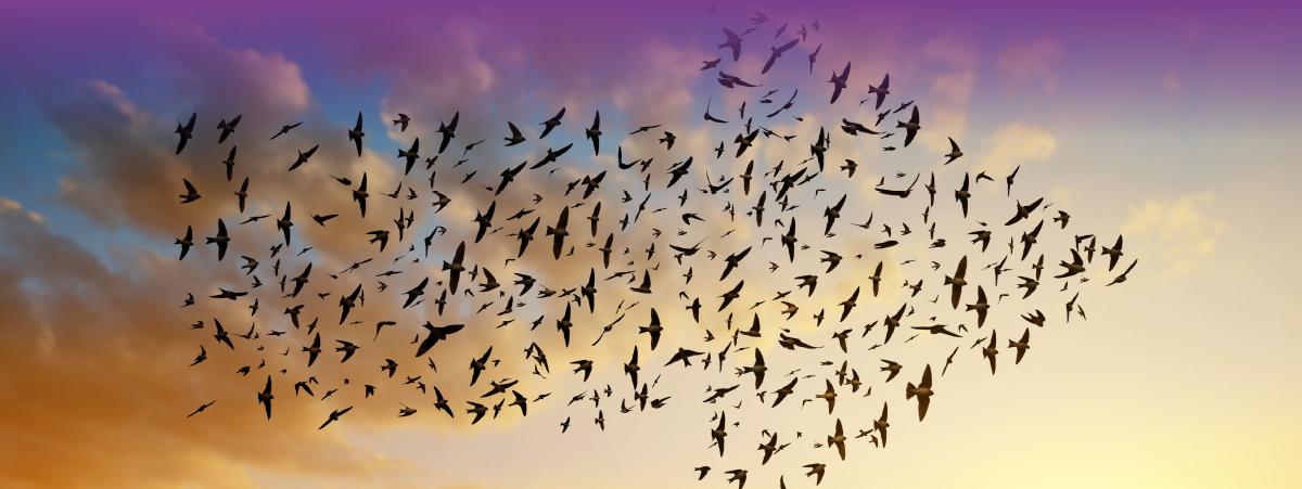 רקע ציפורים